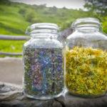 cuillette de fleurs;promenade pour découvrir les fleurs de montagnes;vacances en Savoie;botanique