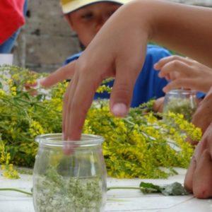 ateliers nature pour les enfants, faire son mâcérat huileux