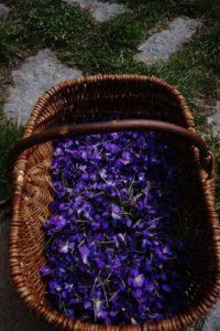 fleurs de montagnes; promenade dans les bauges;apprendre à cueillir et transformer les fleurs