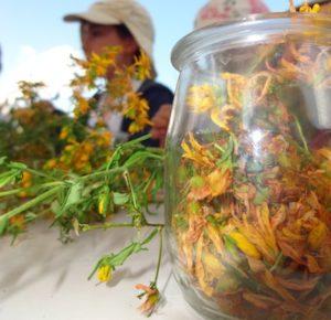 ateliers fleurs à Valloire;ateliers enfants