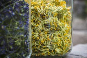cueillette de fleurs, ateliers de transformation de fleurs, phytothérapie en Savoie, apprendre à reconnaitre les fleurs avec Quentin