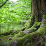Séjour Ressource et vous, séjour hebergement et activites, séjour tout compris savoie, experience ecologique, séjour naturopathie, vacances en savoie, vacances dans les bauges, vacances nature, week-end en savoie, week-end nature